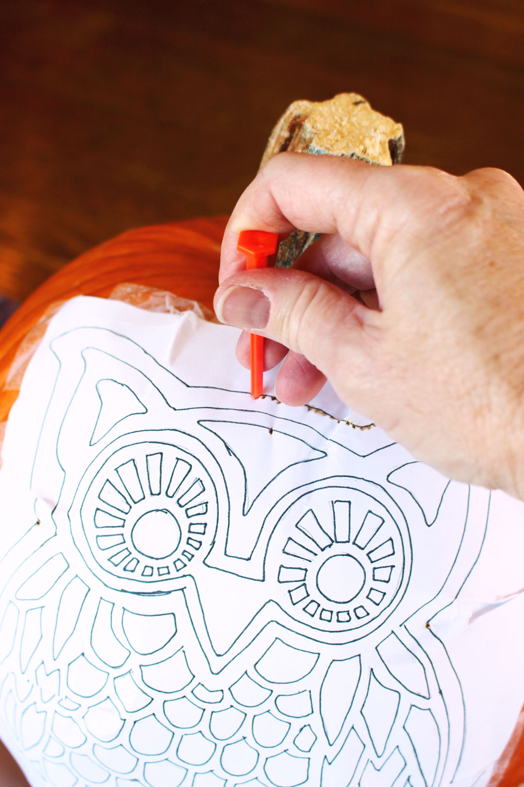 Woodland Owl Pumpkin Carving Deluxe - Welcome To Nana's