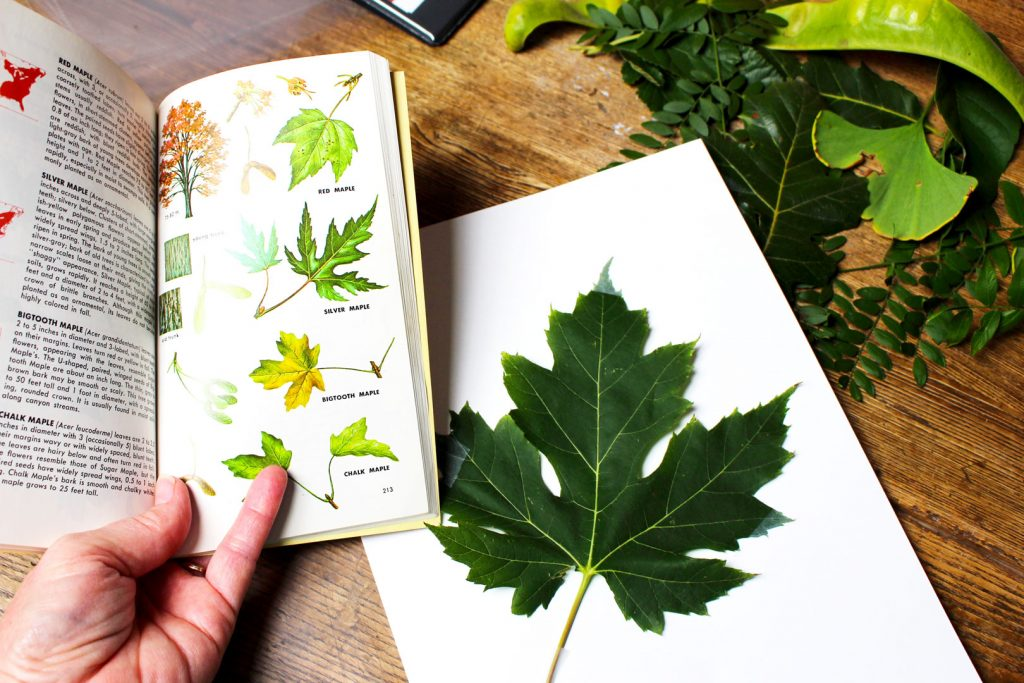 Wel e to Nanas tree leaf identification nature journal kids diy educational craft learning 6 1 1024x683